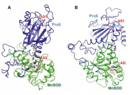 Уникален протеин защитава от радиация