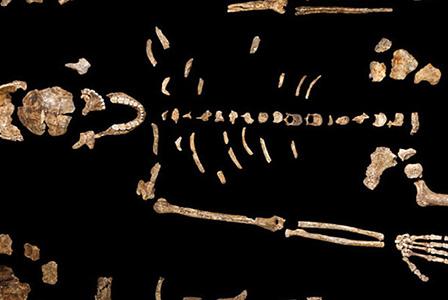 Нов човекоподобен вид беше открит в Африка