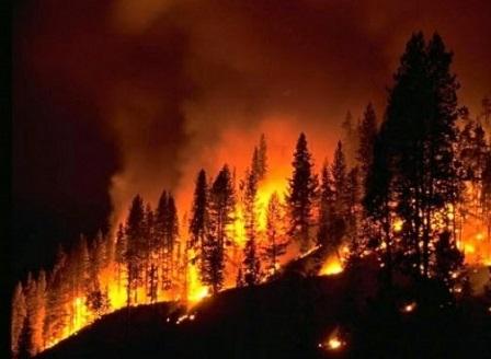Горските пожари в Албания се разрастват