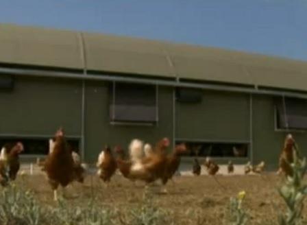 13 партиди със заразени яйца са открити и във Франция