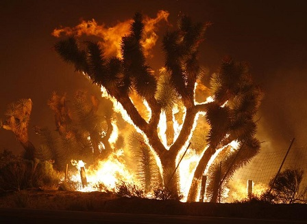 Не стихват горските пожари в Калифорния