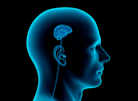 Предричат катастрофален спад на човешкия интелект