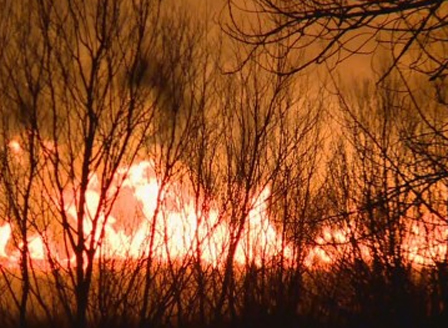 Пожар в Драгоманското блато